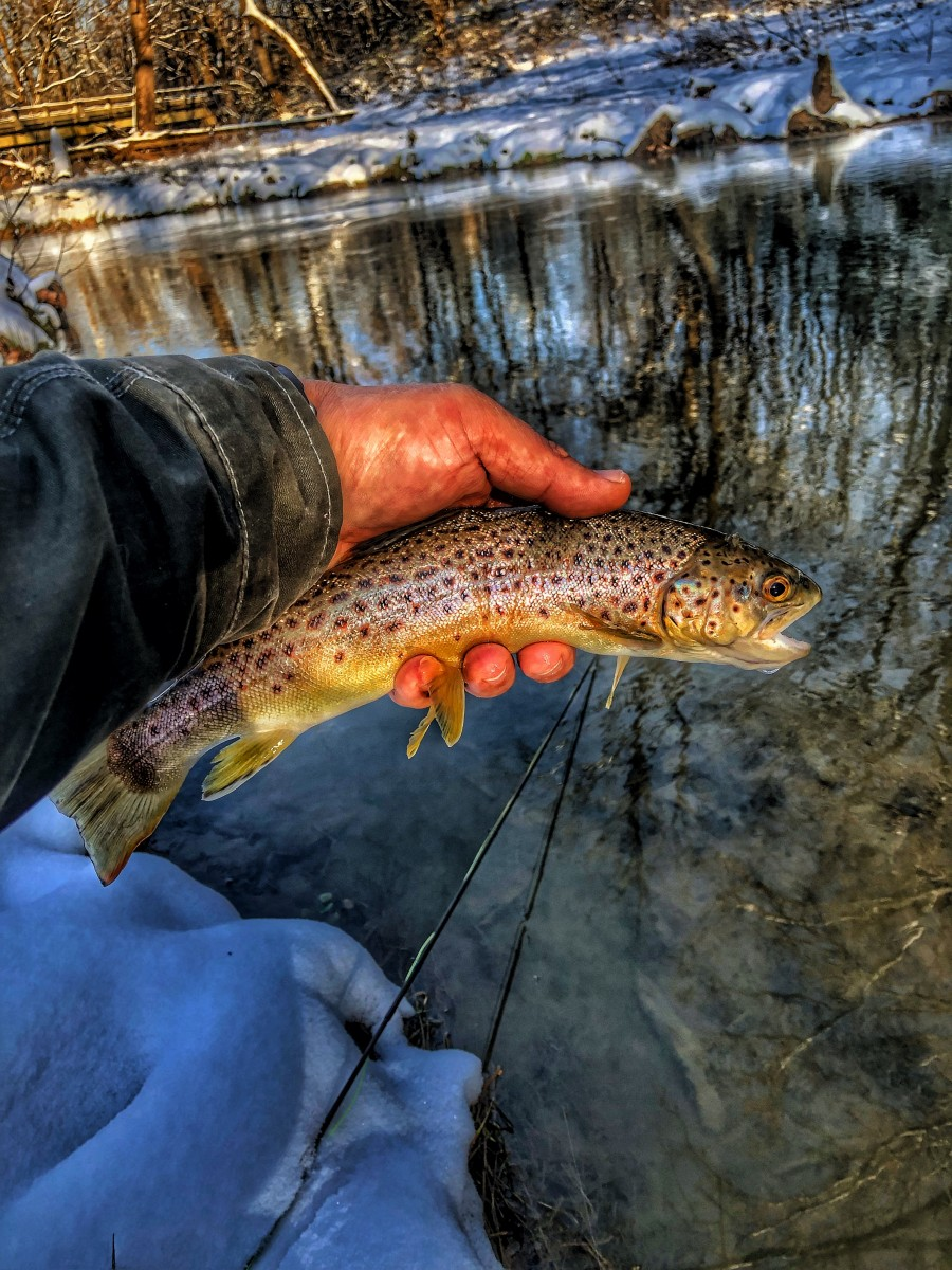 Taco Bout It – A Trout Takes Me Home For the Holidaze