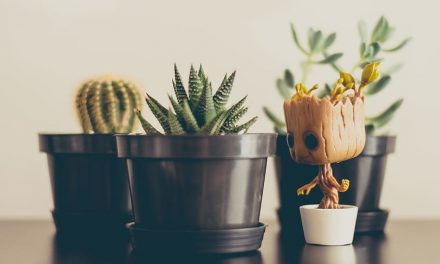 10 Indoor House Plants for Happiness